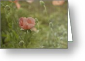 Peach Greeting Cards - Peachy Poppies Greeting Card by Rebecca Cozart