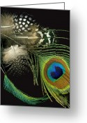 Tamara Stoneburner Greeting Cards - Peacock and Peahen Feathers Greeting Card by Tamara Stoneburner