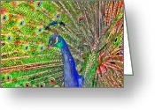 Tail Feathers Greeting Cards - Peacock Fanned Tail Feathers Greeting Card by Tracie Kaska