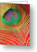 Tail Feather Greeting Cards - Peacock Feather 2 Greeting Card by Kaye Menner