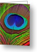 Bold Photo Greeting Cards - Peacock Feather Close Up Greeting Card by Garry Gay
