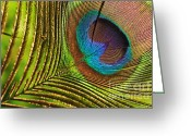 Tail Feather Greeting Cards - Peacock Feather Greeting Card by Kaye Menner