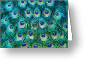 Tail Feathers Greeting Cards - Peacock Feathers Greeting Card by Nikki Marie Smith
