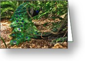 Tail Feathers Greeting Cards - Peacock Hiding Greeting Card by Kaye Menner
