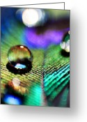 Macro Greeting Cards - Peacock Jewel Greeting Card by Kerry Kralovic