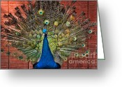 Hera Greeting Cards - Peacock tails Greeting Card by Paul Ward