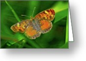 Orange And Green Greeting Cards - Pearl Crescent Greeting Card by Bill Morgenstern