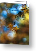 Autumn Colors Greeting Cards - Pearlescent Acers Greeting Card by Mike Reid