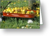 Wheels Greeting Cards - Pears in a Wagon Greeting Card by Gordon Wood