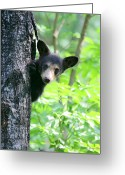 Black Bear Cubs Greeting Cards - Peek-a-Boo Greeting Card by Gerry Sibell