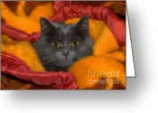 Vet Photo Greeting Cards - Peek A Boo Greeting Card by Joann Vitali