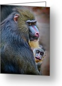 Monkey Greeting Cards - Peek-a-boo Greeting Card by Laura M. Vear