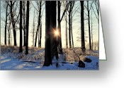 Redwood Greeting Cards - Peekaboo Greeting Card by Robert Harmon