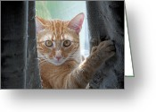 Whiskers Greeting Cards - Peeking Clint Greeting Card by Kenneth Albin