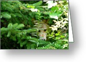 Nature And Wolves Greeting Cards - Peeking Out Wolf Greeting Card by Debra     Vatalaro