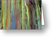 Shed Greeting Cards - Peeling Bark- St Lucia. Greeting Card by Chester Williams