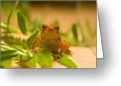 Peeping Greeting Cards - Peeping Toad Greeting Card by Douglas Barnett