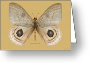 Amimal Greeting Cards - Peeping Tom Butterfly Greeting Card by Walter Colvin