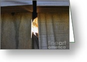 Calico Cat Greeting Cards - Peeping Tomcat Greeting Card by Al Powell Photography USA