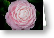 Florida Flowers Greeting Cards - Pefectly Pink Greeting Card by Rich Franco