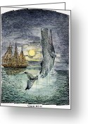 Dick Greeting Cards - Pehe Nu-e: Moby Dick Greeting Card by Granger