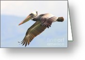 Pelicans Greeting Cards - Pelican in the Sky Greeting Card by Wingsdomain Art and Photography