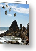 Sea Bird Greeting Cards - Pelican Inspiration Greeting Card by Gwyn Newcombe