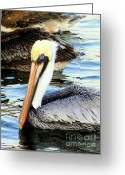 Sea Birds Greeting Cards - Pelican Pete Greeting Card by Karen Wiles