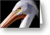 Pelicans Greeting Cards - Pelican Portrait Greeting Card by Bruce J Robinson