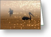Pelican Greeting Cards - Pelican Sunrise Greeting Card by Mike  Dawson