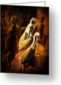 Rock Formation Greeting Cards - Pelicans Corner Greeting Card by Leah Moore