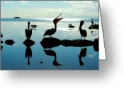 Nikon D200 Greeting Cards - Pelicans Key West Greeting Card by Timothy DeMasters