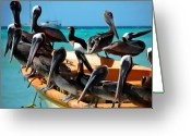 Pelican Photo Greeting Cards - Pelicans on a boat Greeting Card by Bibi Romer