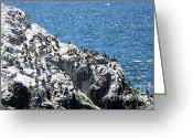 Bay Islands Greeting Cards - Pelicans on Seal Rocks At Ocean Beach in San Francisco . 40D7924 Greeting Card by Wingsdomain Art and Photography