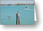 Intercoastal Greeting Cards - Pelicans Rule Greeting Card by Aimee L Maher