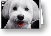 Petstagram Greeting Cards - Pelle Greeting Card by Natasha Marco