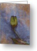 Texture Flower Photo Greeting Cards - Penchant Naturel - 07at04b3 Greeting Card by Variance Collections