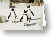 Three Animals Greeting Cards - Penguins On Beach Greeting Card by Rebecca Yale