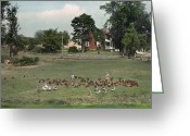 Pennsylvania Dutch Greeting Cards - Pennsylvania Dutch Children Feed Geese Greeting Card by J. Baylor Roberts