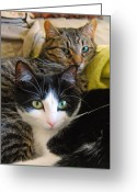 Cats Greeting Cards - Penny and Baby Greeting Card by Tony Ramos