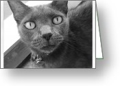 Petstagram Greeting Cards - Penny Greeting Card by Cameron Bentley
