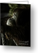 Pensive Greeting Cards - Pensive orang utan Greeting Card by Sheila Smart