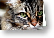 Pensive Greeting Cards - Pensive Sasha Greeting Card by Fraida Gutovich