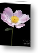 Pink Peonies Greeting Cards - Peony Flower Portrait Greeting Card by Jennie Marie Schell