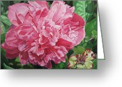 - Harlan Greeting Cards - Peony with ant Greeting Card by - Harlan