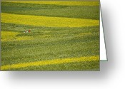 World Culture Greeting Cards - People In A Rapeseed Field Greeting Card by David Evans