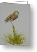 Owl Prints Greeting Cards - Perched Greeting Card by Alan Suliber