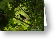 The Buffet Greeting Cards - Perched in Green  Greeting Card by Jack Norton