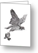 Falcon Drawings Greeting Cards - Peregrine Falcon Greeting Card by Kelly Harris