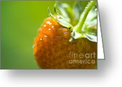 Market Greeting Cards - Perfect Fruit of Summer Greeting Card by Heiko Koehrer-Wagner